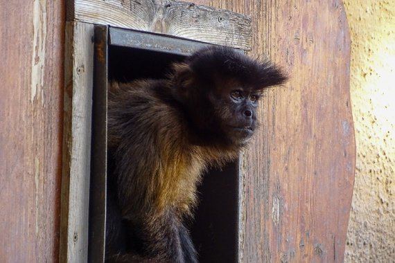 Zoo Hellbrunn 2019